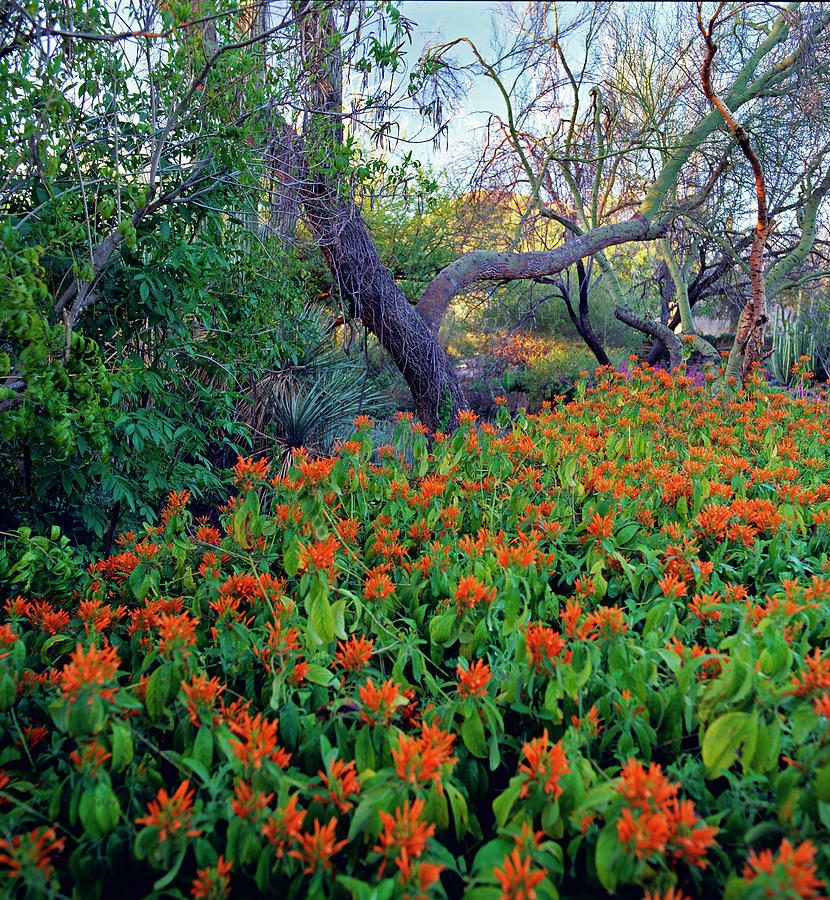 Phoenix Botanical Garden Photograph by Richard Felber