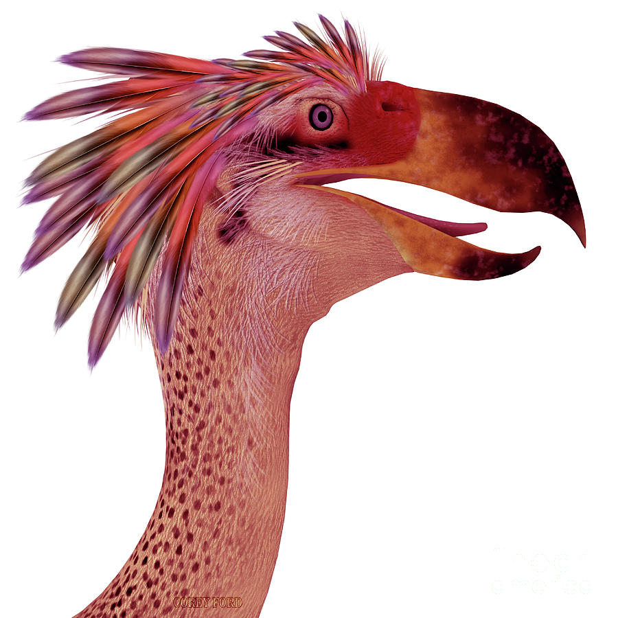 Phorusrhacos Bird Head by Corey Ford