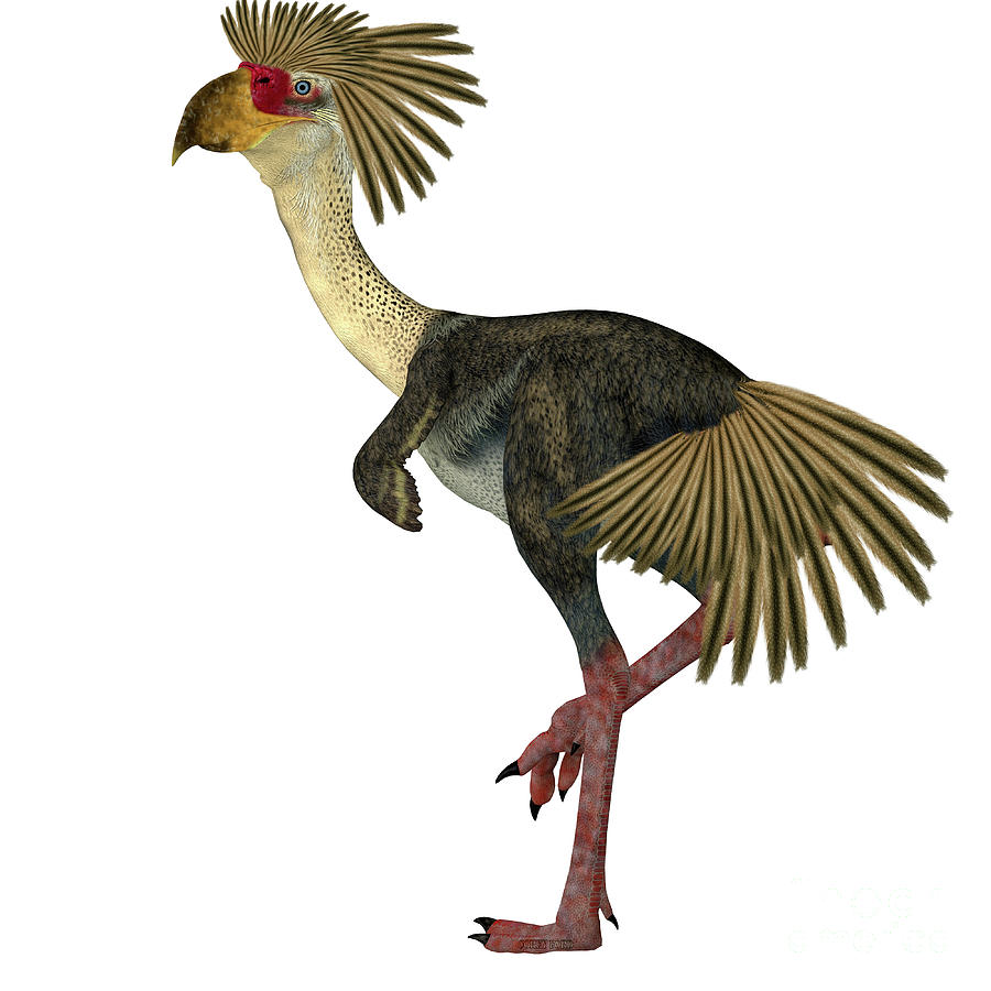 Phorusrhacos Bird Tail by Corey Ford