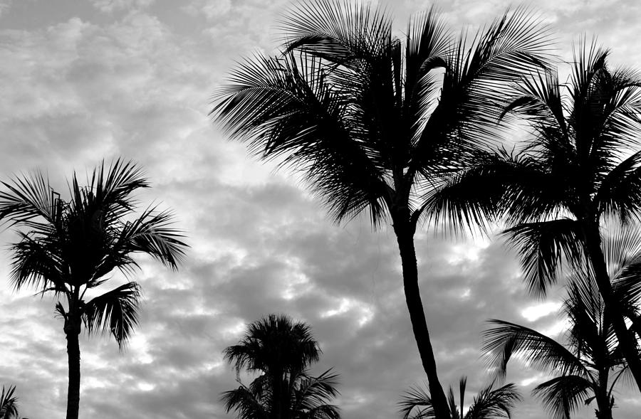 Photo 53 Palm Trees by Lucie Dumas