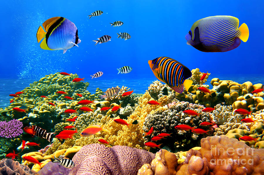 Deep Photograph - Photo Of A Coral Colony On A Reef, Egypt by Vlad61
