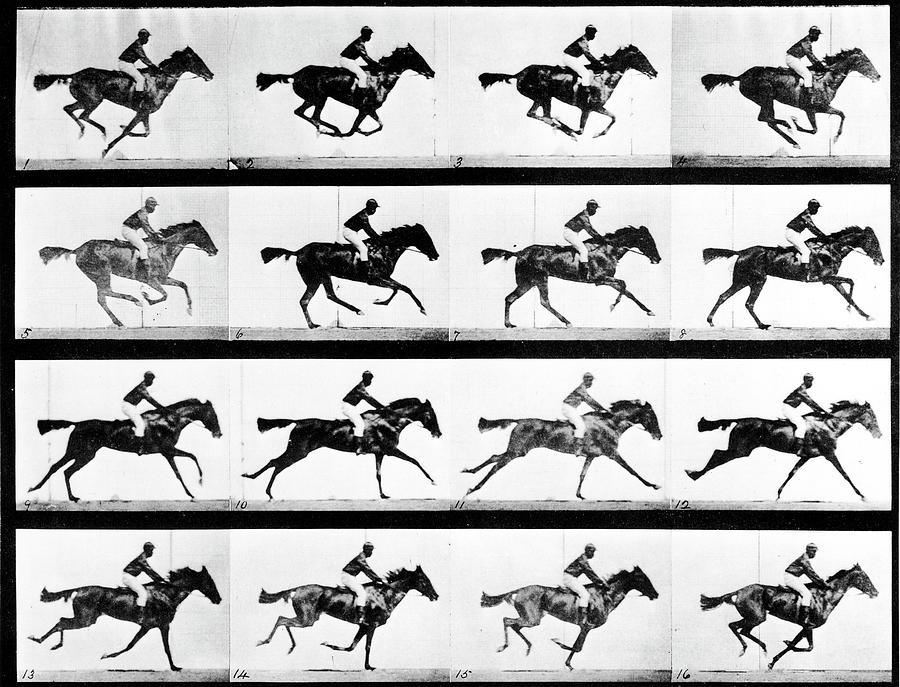 Photographer Eadweard Muybridges Study Photograph by Eadweard Muybridge