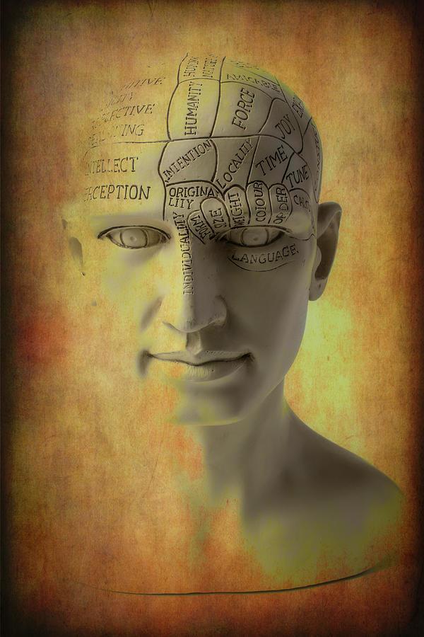 Phrenology Photograph - Phrenology Head Abstract by Garry Gay