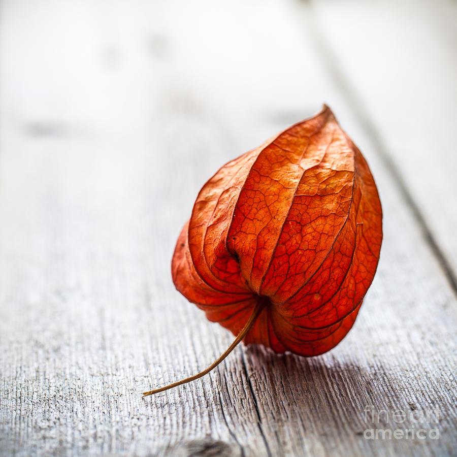 Cherry Photograph - Physalis Alkekengi On Wood by Pavel Hlystov