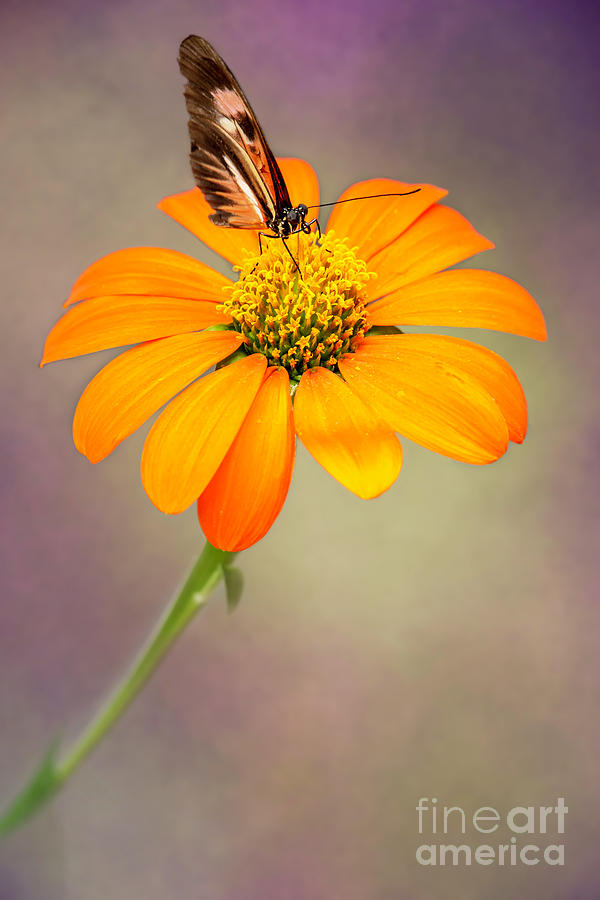 Piano Key Butterfly Taking a Drink by Sabrina L Ryan
