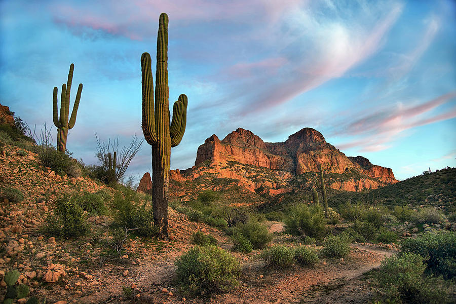 PicketPost Mountain with Saguaro Cactus by Dave Dilli