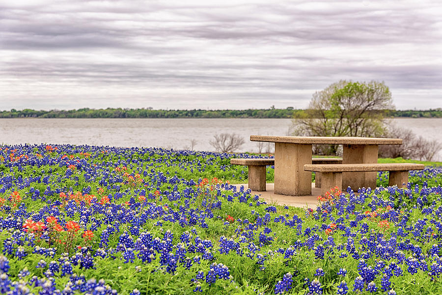 Picnic in the Bluebonnets by Victor Culpepper
