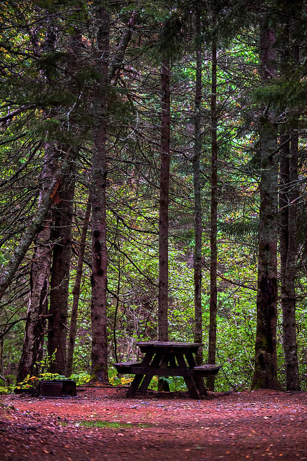 Forest Photograph - Picnic Table by Paul Freidlund