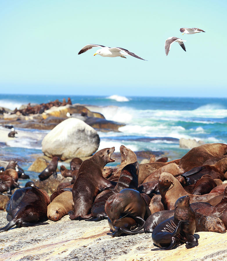 Picture Of Sea Lion And Seagull Photograph by Bo1982