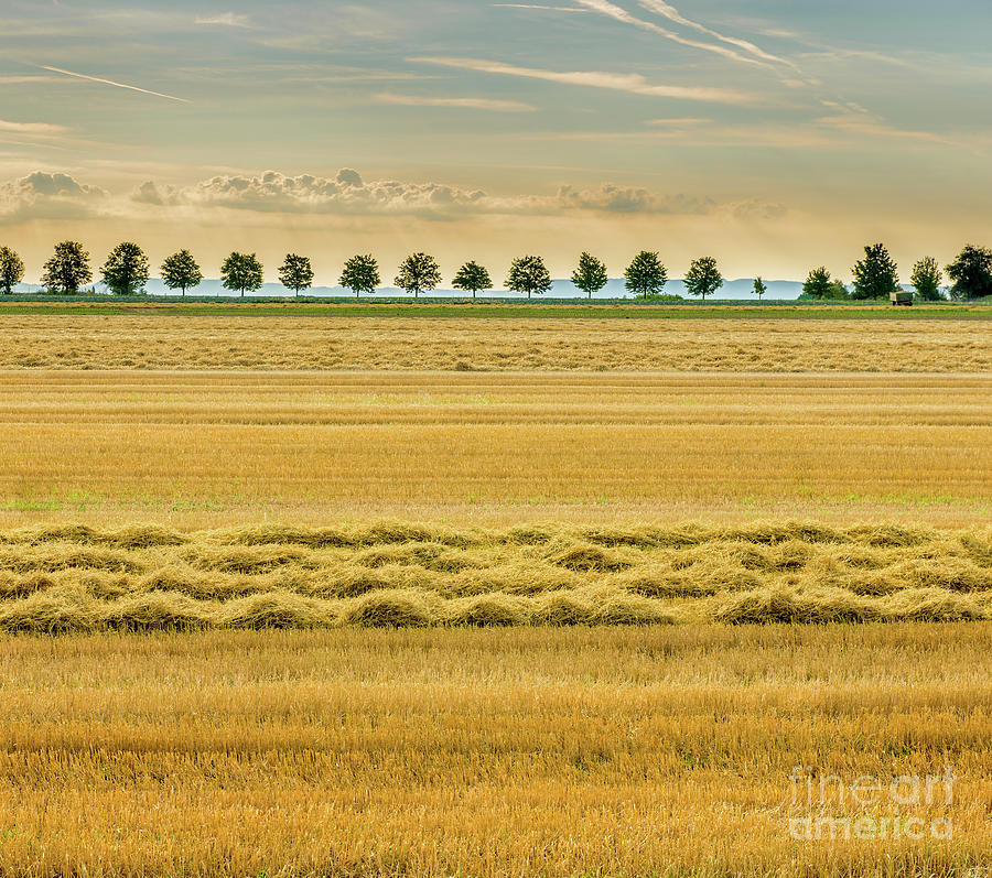 Picturesque harvested golden stubble field in autumn. by Ulrich Wende