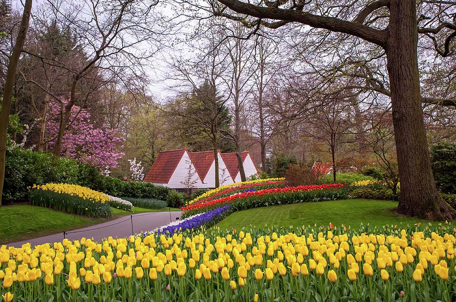 Picturesque Spring Scene of Keukenhof Garden by Jenny Rainbow