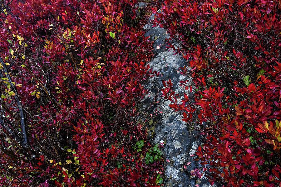 Pieces of Autumn by Lj Lambert