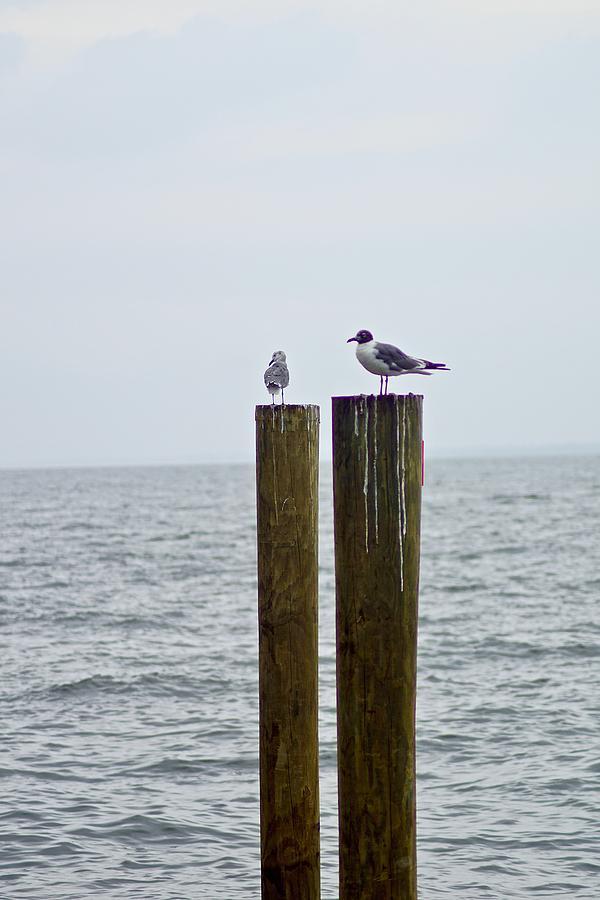 Dock Photograph - Pier  by Gillis Cone