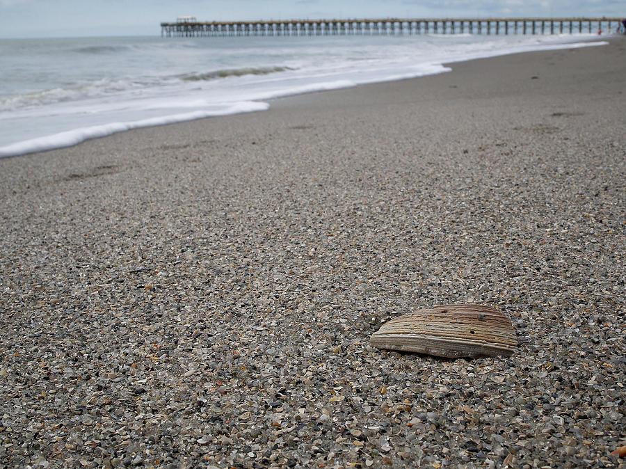 Pier Photograph - Pier Seashell by David Palmer