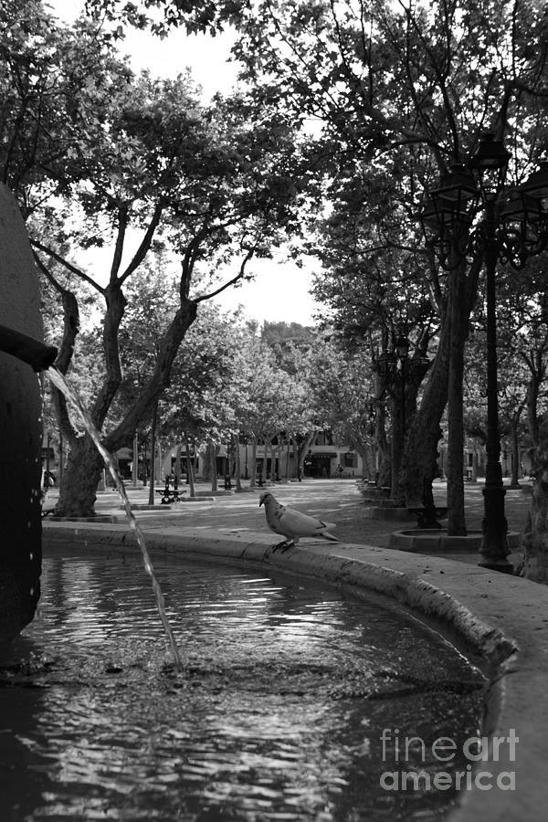 Pigeon Place des Lices by Tom Vandenhende