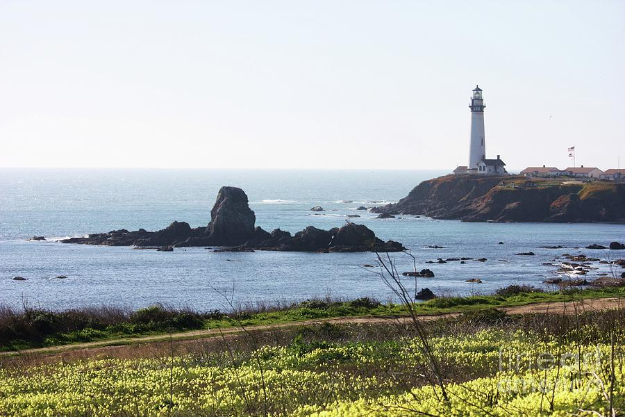 Pigeon Point Lighthouse with Wildflowers by Carol Groenen