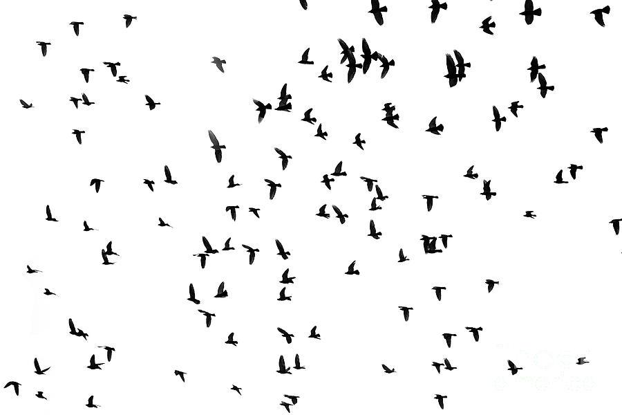 Pigeons in the sky by Patricia Hofmeester