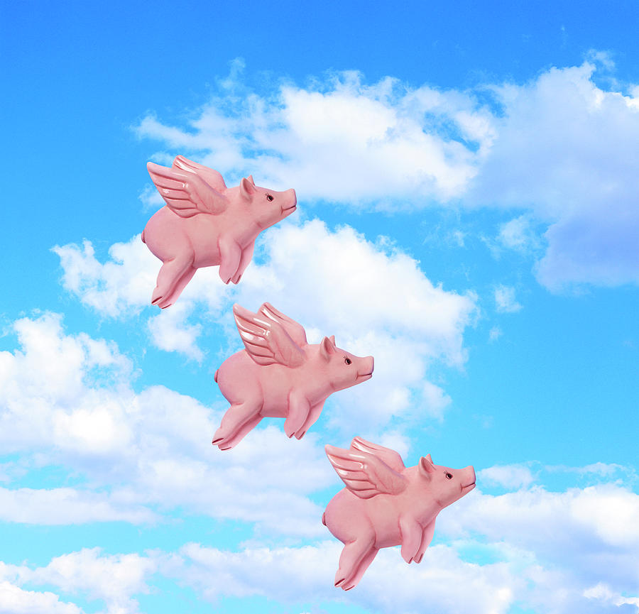 Pigs Might Fly Photograph by Peter Dazeley
