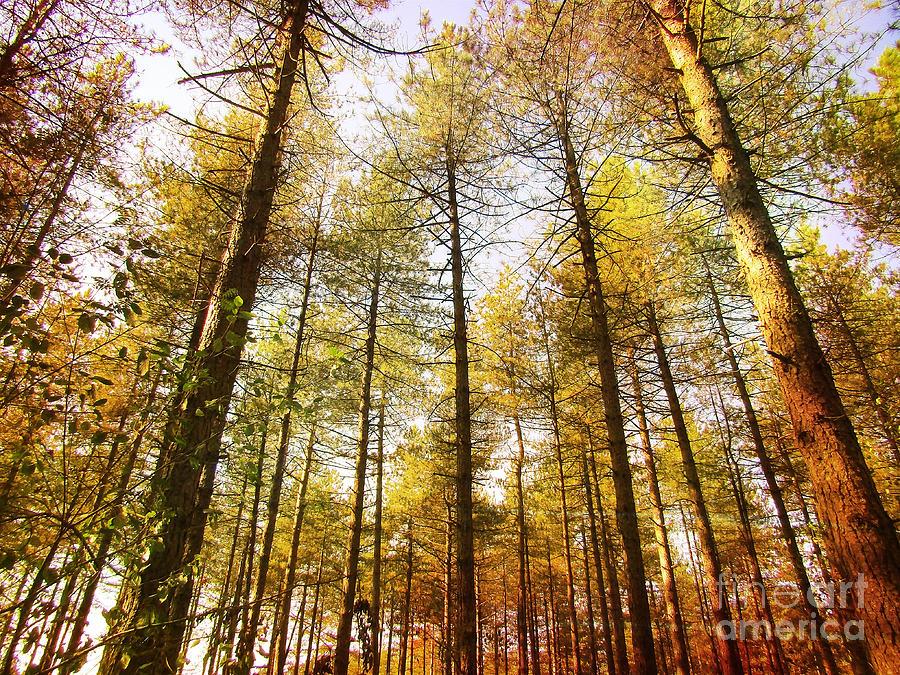 Forest Digital Art - Pijnven Summer by Jurgen Huibers