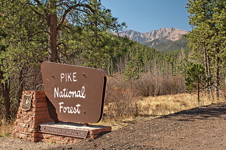 Pike National Forest by Kristia Adams