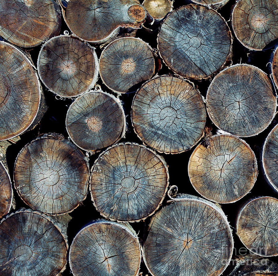Forest Photograph - Pile Of Wood Logs Ready For Winter by Zastolskiy Victor