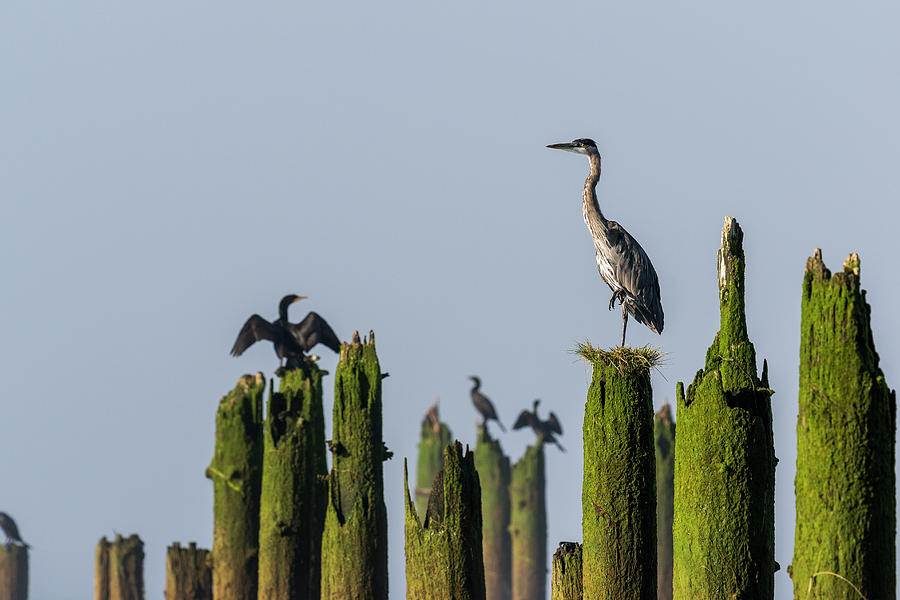 Piling Perches by Robert Potts