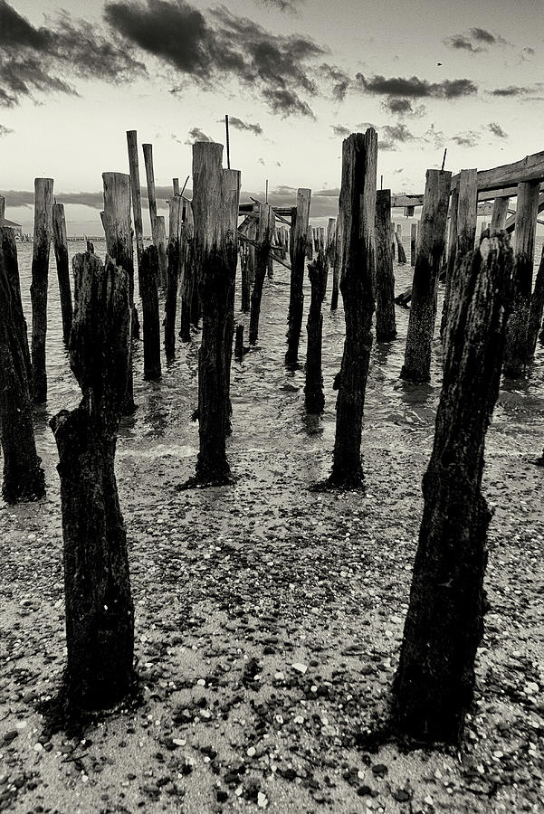 Pilings by Frank Winters