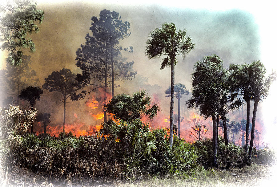 Pine and Palmetto Fire by Robert Potts