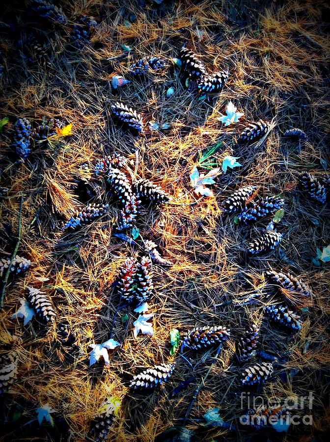 Nature Photograph - Pine Cones Morning Sunlight by Frank J Casella