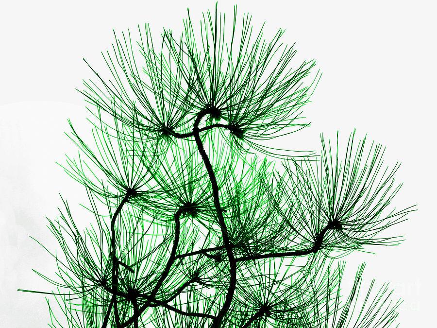Pine Needles in Black and Green by Norman Gabitzsch