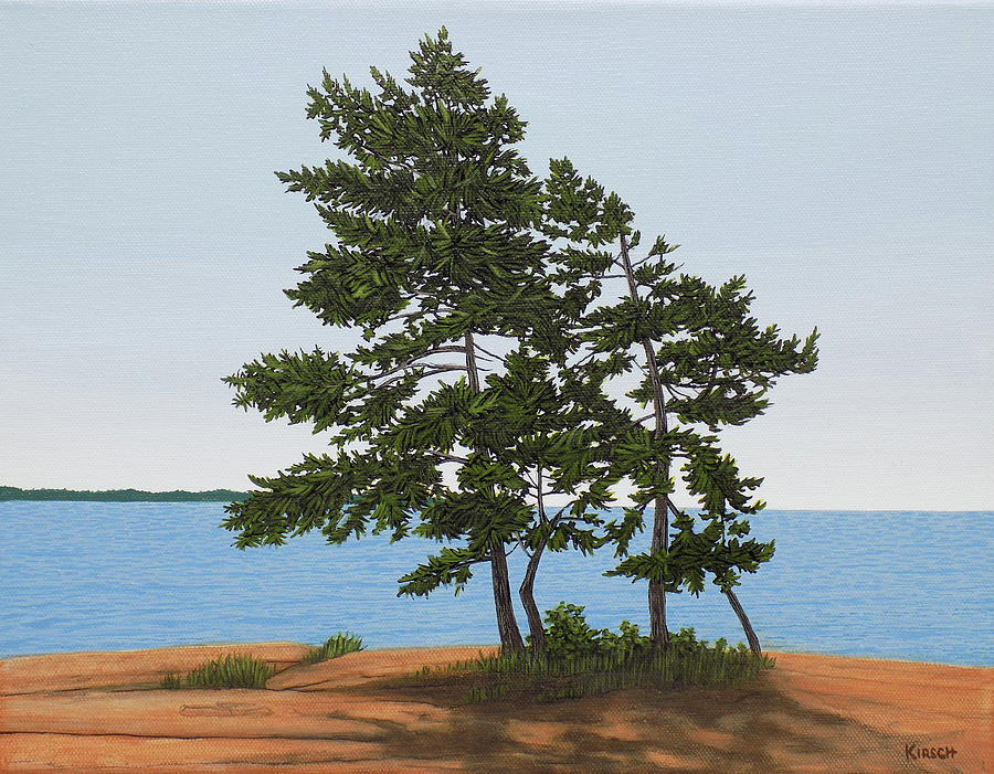 Pine on the Point by Kenneth M Kirsch