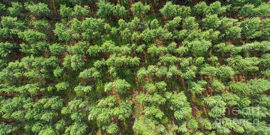 Manistee Photograph - Pine Rows Aerial 2x1 by Twenty Two North Photography