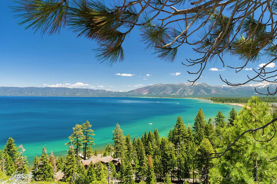 Pine Trees, Lake Tahoe, California, Usa Photograph by Stuart Dee