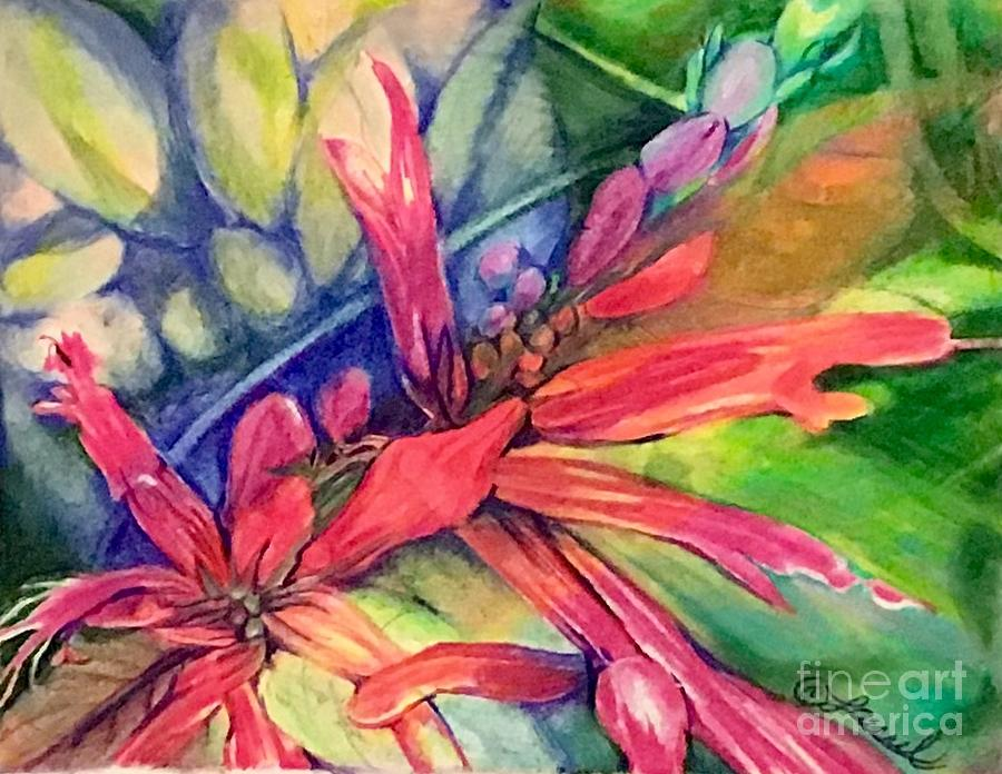 Pineapple Sage Blossoms by Laurel Adams