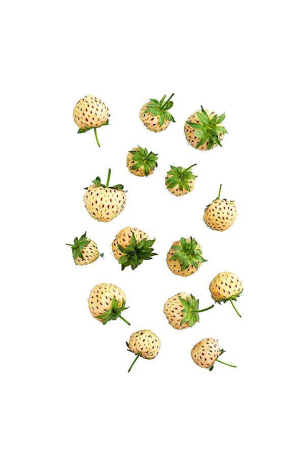 Pineberries Digital Art - Pineberries Hybrid  by Illidan Raven