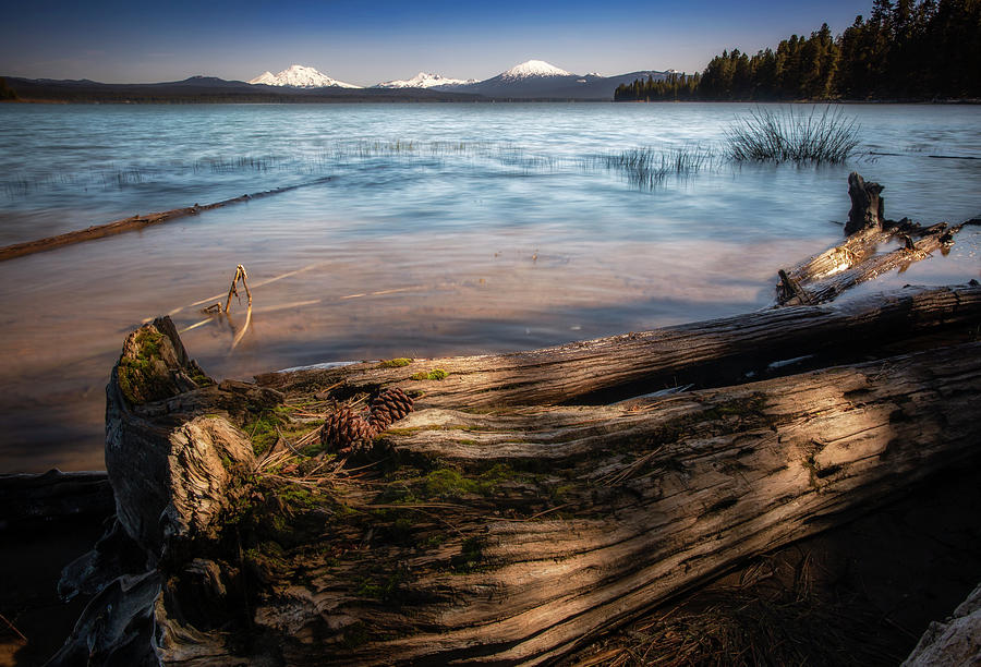 Lake Photograph - Pinecones On A Log by Cat Connor