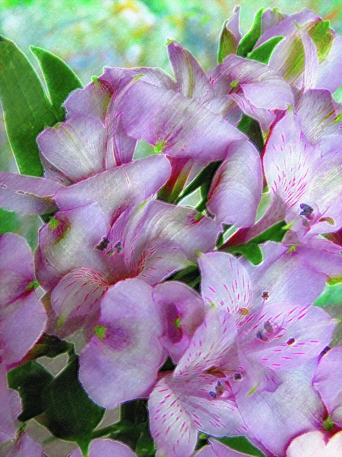 Lavender Alstroemeria 6010 by Corinne Carroll