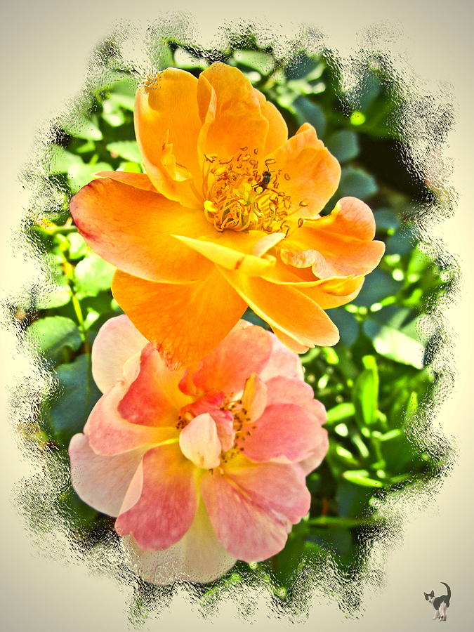 Pink And Apricot Roses by Joyce Dickens