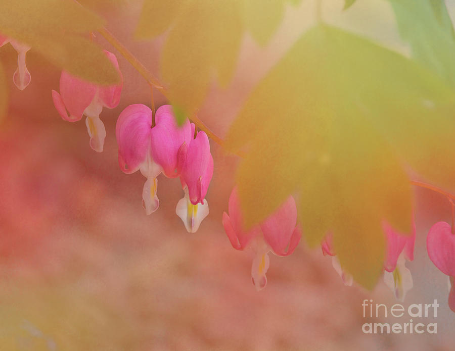 Pink Bleeding Hearts by Pam  Holdsworth