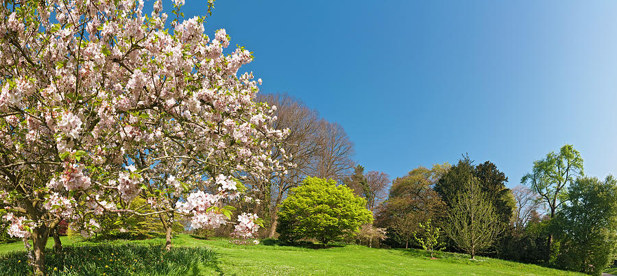 Scenic Photograph - Pink Blossom Blooming Lush Green Spring by Fotovoyager