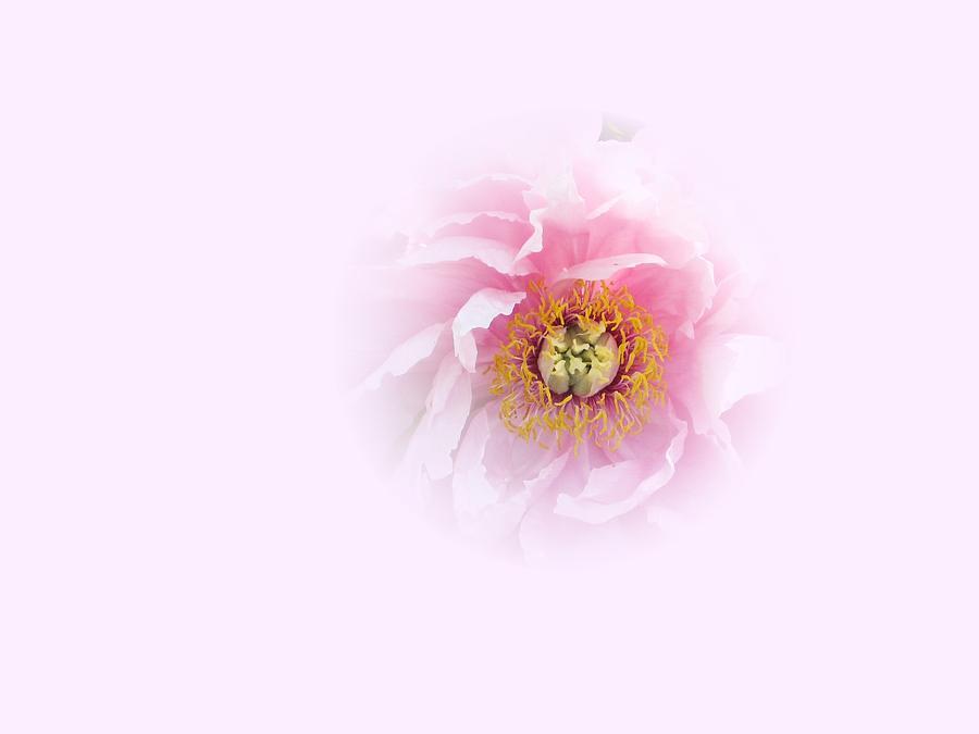 Pink Breath by Cindy Greenstein