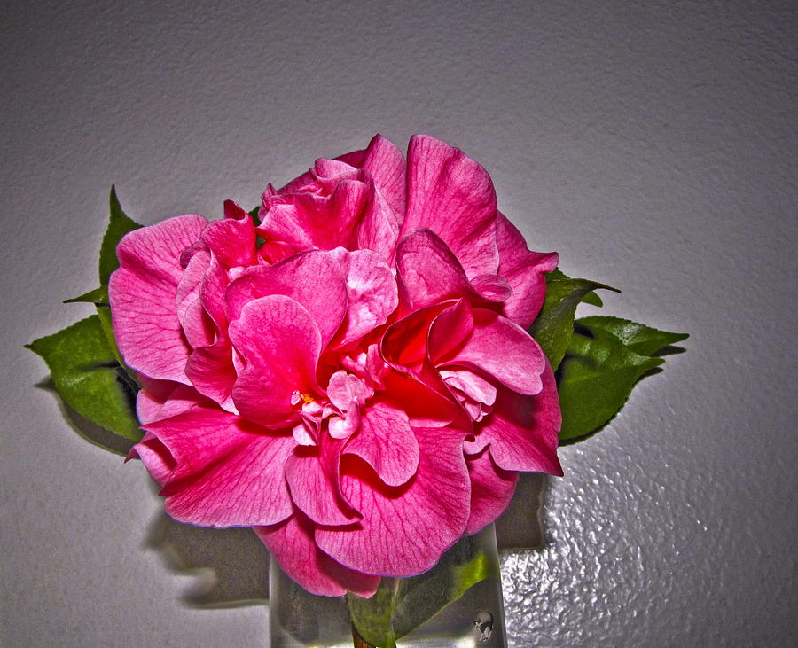Pink Camellia Portrait by Joyce Dickens