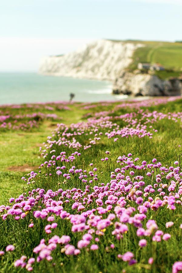 Pink Coastal Path Photograph by S0ulsurfing - Jason Swain