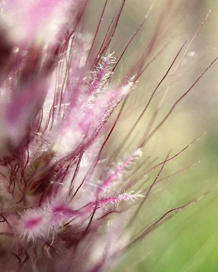Pink cotton candy by Michael Van Huffel