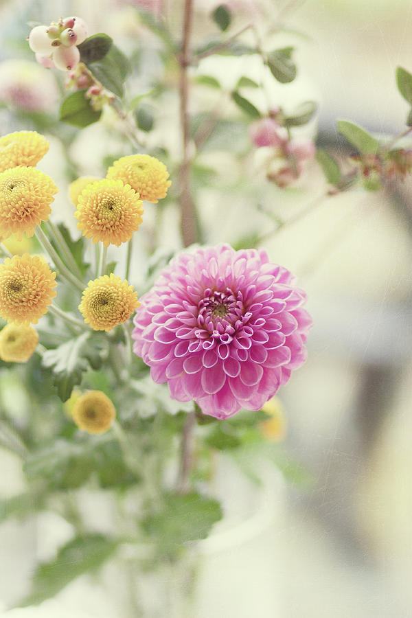 Pink Dahlia In Bouquet Of Flowers And Photograph by Helaine Weide