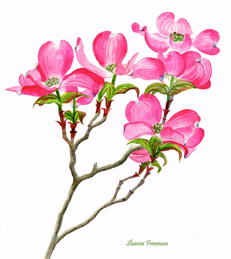 Pink Painting - Pink Dogwood Vertical Design by Sharon Freeman
