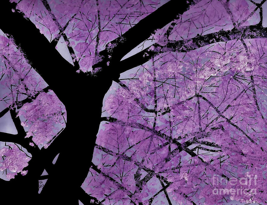 Pink Filled Red Bud Tree by D Hackett