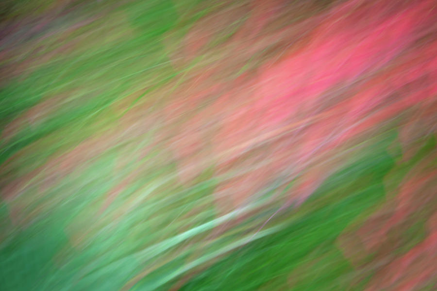 Pink Flower Abstract by R Scott Duncan