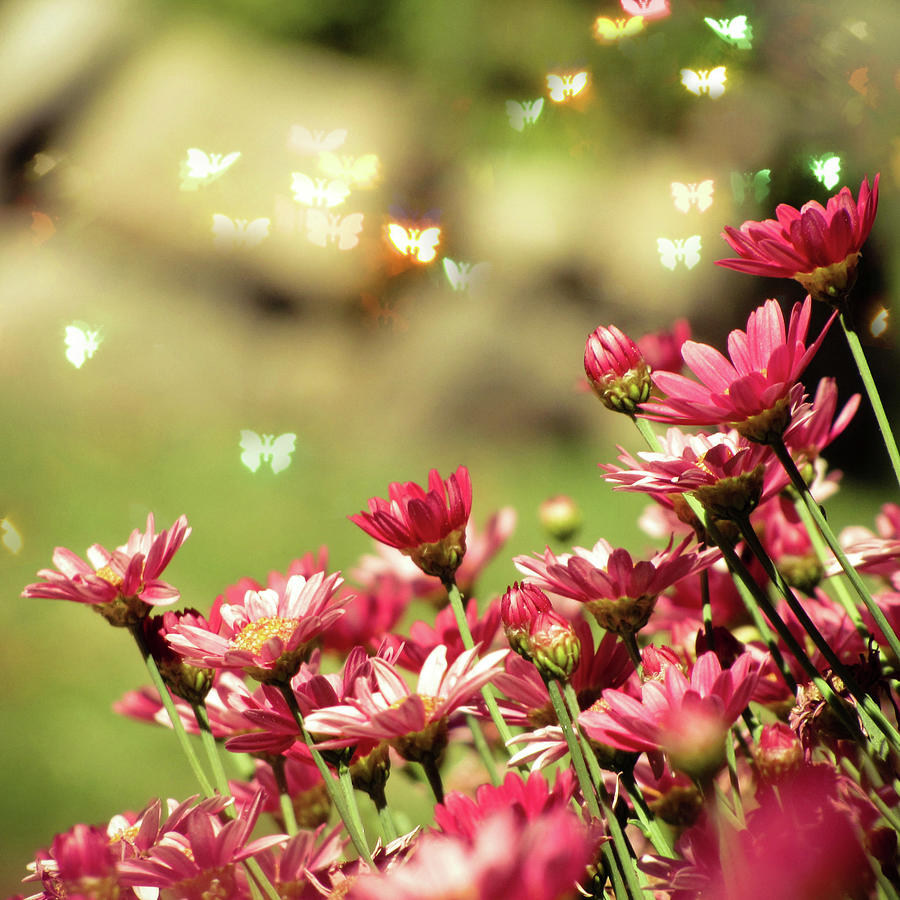 Pink Flower Photograph by Roxirosita
