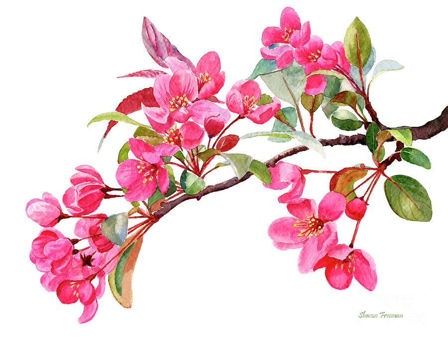 Pink Painting - Pink Flowering Tree Blossoms by Sharon Freeman